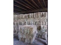 Excellent Quality Small Bale June 2017 Meadow Hay