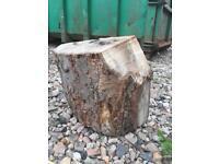 Tree fire wood