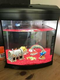 Fish tank with 5 freshwater fish.