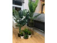 House plants - fake