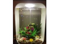 Biorb fish tank all set up and running all fish and more good including