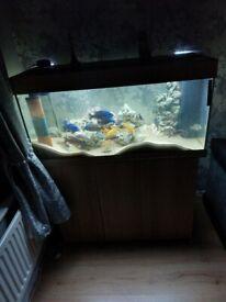 Fish tank eveything invluded