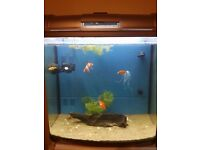 Complete 90 Liter Fish Tank with LED Lights and 5x Fresh Water Fishes