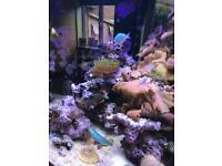 4ft marine tank full set up corals, live rock