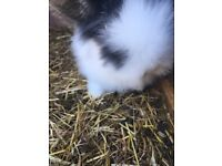 4 beautiful rabbit for sale