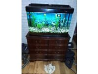 Fish tank on a stand , great filter worth 65 pounds, maintainance equipment and other accessories