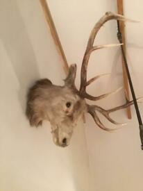 Antique stags head