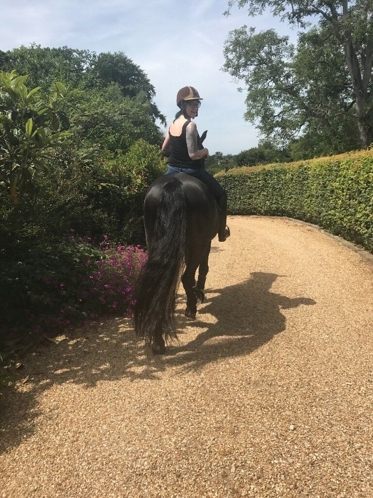 Pet-sitter/dog walker/equine grooming and care available