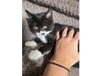 2 kittens and cats for sale