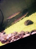 Tank and fish for sale!