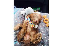 9 Week old puppy- Rumple