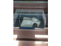 Gerbal/mice cage