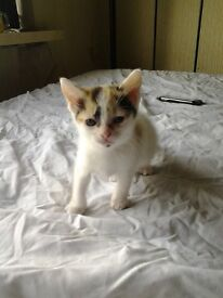 Lovely cats and kittens for sale. 9 weeks old kittens and also older.