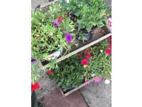 Mixture of flowers on wooden stand