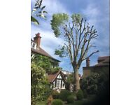 GARDEN CUT BACKS Tree Surgeons