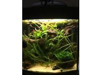 Fish tank, nano aquarium