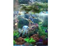 Fish tank aquarium 4ft bow front