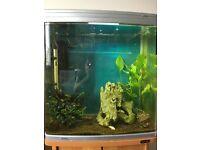 Fish tank Aqua one 620t with accessories