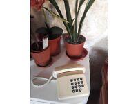 BT Tribune Vintage Corded Telephone