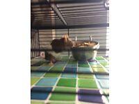 2 female mice