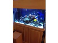 Fish Tank Marine\Tropical Full set 350 ONO