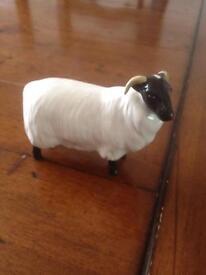 Lovely beswick sheep