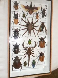 SCARY INSECTS IN DISPLAY CASES