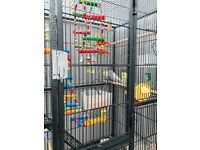 Large bird cage excellent condition as new with 4 budgies and accessories