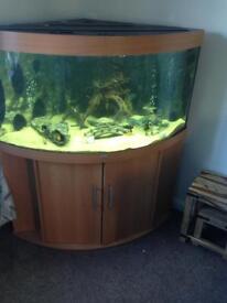 Juwel trigon 350 aquarium