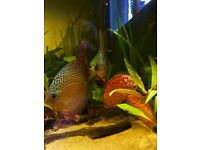 Variety of discus individually priced