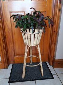 Cane Plant Holder