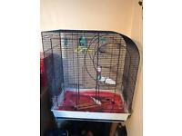 Budgie/Bird Cage