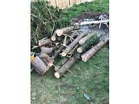 Wood logs free for collection
