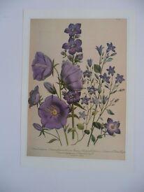 Traditional Flower Prints ( quantity 6 )