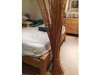 Sheaf of cane