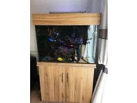 BARGAIN MARINE FISH TANK INCLUDING FISH, CORALS,LIVE ROCK, ALL EQUIPMENT AND MANY EXTRAS