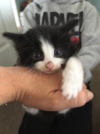 2 gorgeous kittens