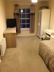 Large single room to rent
