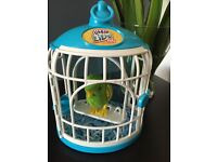 Little live bird and cage