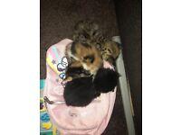 2 Kittens for sale 2 girls