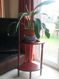 Corner table and flowering plant