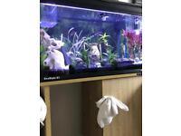 Fish tank 127 litre