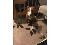 14 week old Male puppy