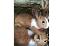 Rabbits baby's