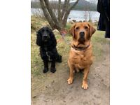 HIGHLAND WALKIES , Dog walking and dog sitting