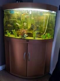 Juwel 190 corner fish tank, stand and complete set up