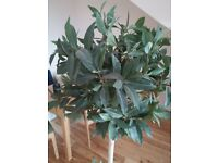 Tall Olive Tree (fake)