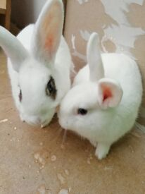 Two cute rabbits with cage