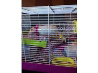 Selling our Syrian Hamster (brand new); with cage; bedding, accessories and food