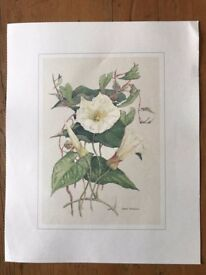 4 x botanical prints